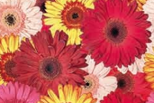 9340-flowers
